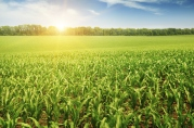 USDA-farm